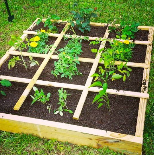 Square Foot Gardening 101: Part One |